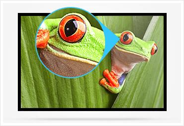 4k frog