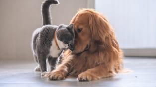 Cat loving a dog
