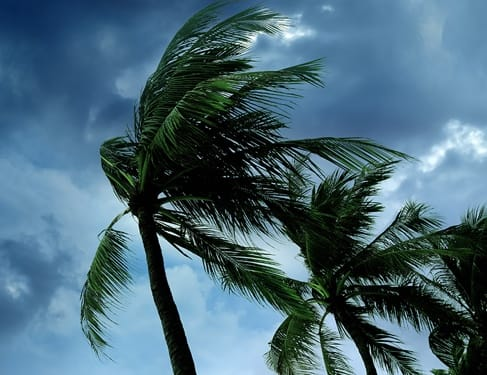 Palm trees blowing in strong hurricane wind