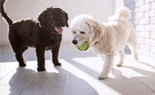 Image of two puppies playing with a ball